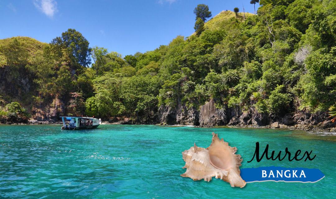 Dossier spécial Murex Dive Bangka (4)
