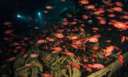 Vestiges et vertiges en Mer Rouge
